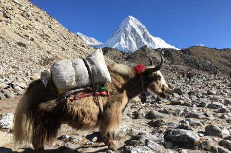 Everest Panaroma Trekking
